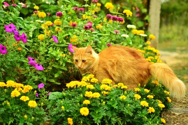 Red cat among the flowers.