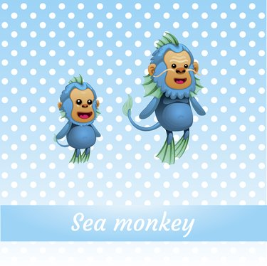 Two funny monkeys from the depths of ocean