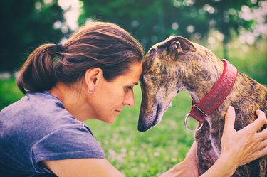 Portrait of spanish galgo dog and woman