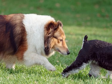large dog sniffing smaller dog's butt in the grass
