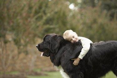 Boy (6-7) hugging black Newfoundland outdoors