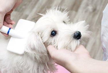 Grooming dog, man scratching puppy slicker