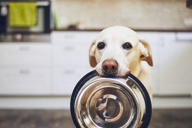 hungry dog holding food bowl