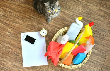 Cleaning service background with a beautiful home cat and checklist