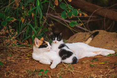 Portrait of happy family of two street cats relaxing