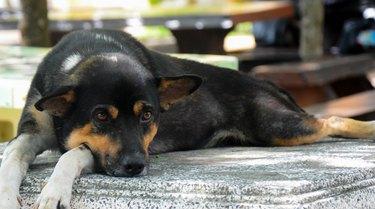 Black Dog Laying Down On Granite Chair