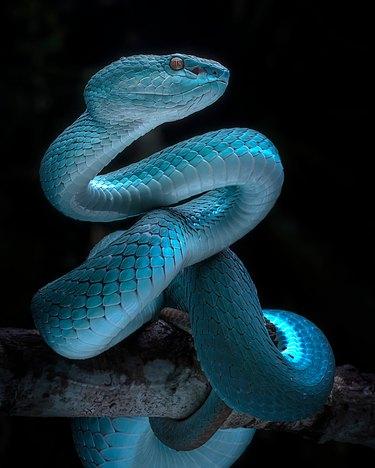 Close-Up Of Snake At Night