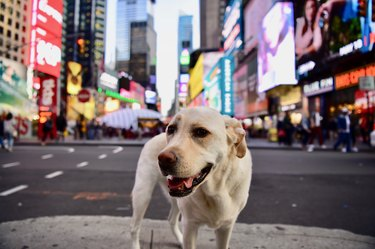 dog in Times Square