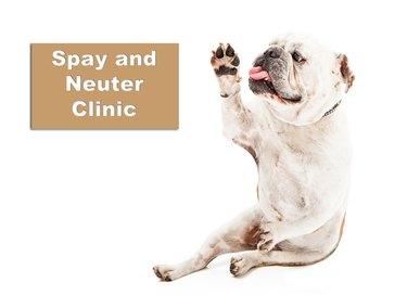 Bulldog Spay and Neuter Clinic
