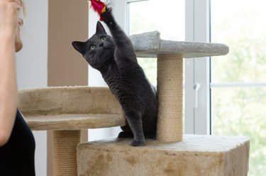 cat playing with toy on cat tree