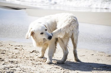 Dog Biting His Tail