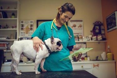 Happy veterinarian examining medical documents of a dog.