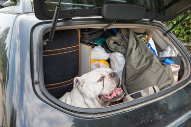 Concept of no abandonment of animals and of correct behavior during the summer holidays. Dog in the car, with lots of luggage, leaving for the summer holidays