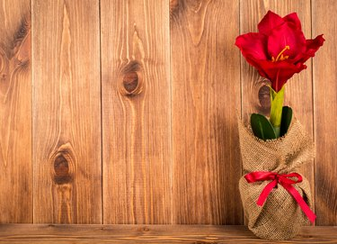 Christmas decorative artificial red amariyllis flower on the wooden background.