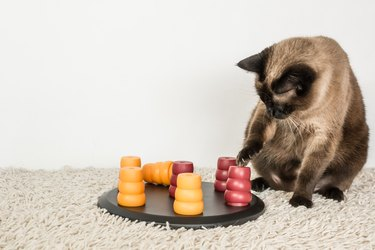 Intelligent cat playing with cat puzzle.