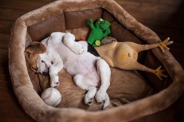 Dog Sleeping In Pet Bed