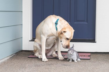 Bunny and Dog Hanging Out Together