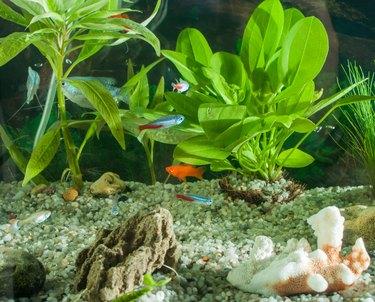 aquarium with many fish and natural plants.Tropical fishes.aquarium with green plants