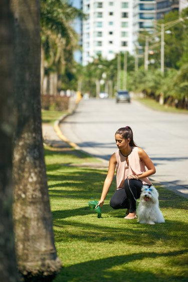Why don't some people pick up their dog's poop?
