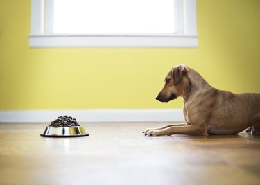 Side view of dog looking at food while sitting on floor