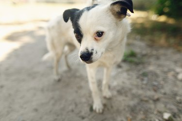 cute little scared dog from shelter posing outside in sunny park, adoption concept