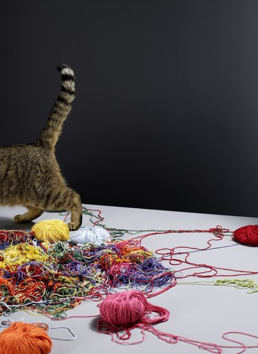 Tabby cat walking away from pile of messy colourful wool