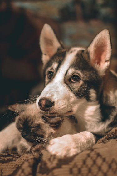 Friendly puppy and kitten lying in an embrace