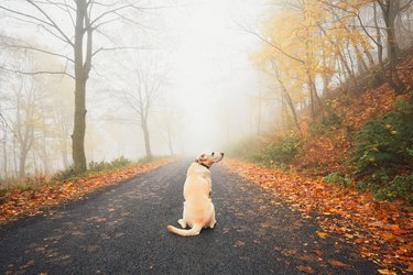Alone dog in mysterious fog in autumn