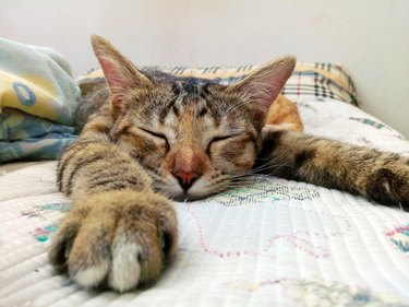 Cat sleeping on the couch