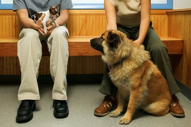 Dogs looking at each other in veterinary clinic waiting room
