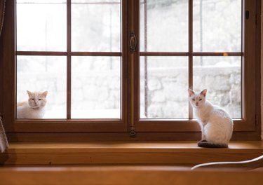 Portrait Of Cats Sitting By Window