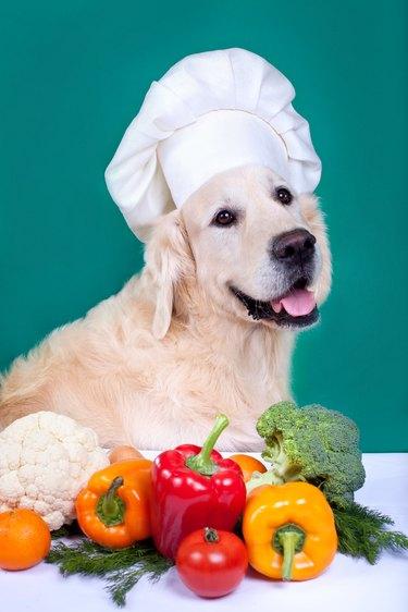Golden retriever dog cooking