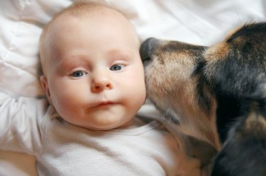 Pet Dog Kissing Two Month Old Baby