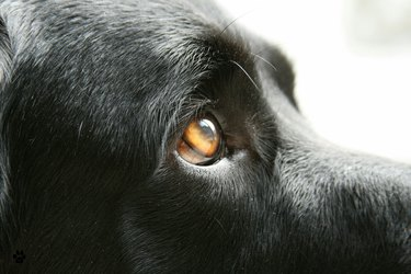 Close-Up Of Dog Looking Away
