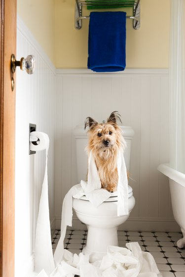 Portrait of cute dog wrapped in toilet paper on toilet seat