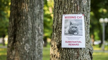 Banner with the announcement of the missing cat hanging on a tree in the park