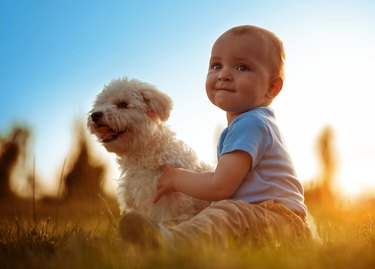 Happy child playing with his dog