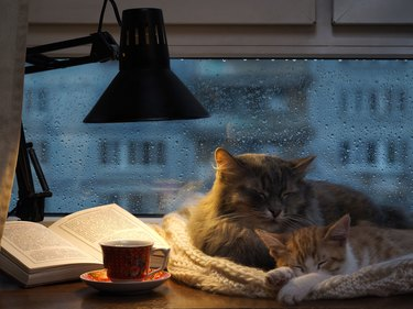 Cats sleeping in the window.