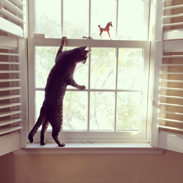 Cat Standing at Window