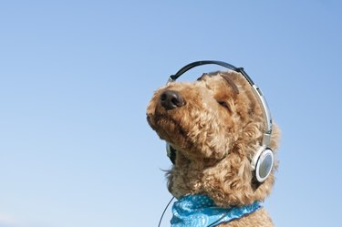 A dog listening to music with headphones