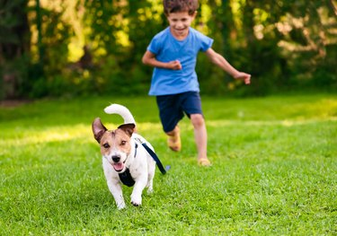 cute dog running from child in grass