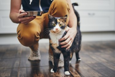 person standing behind calico cat on floor