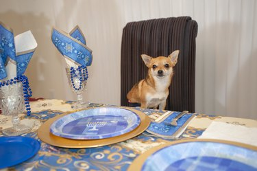 Dog attending a Hanukkah party