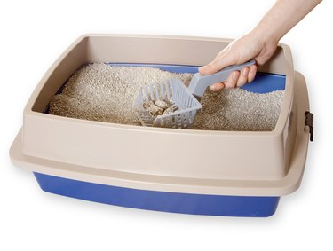Cleaning Out Litter box