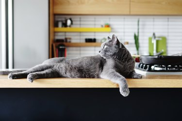 Cat Relaxing On Kitchen Counter At Home