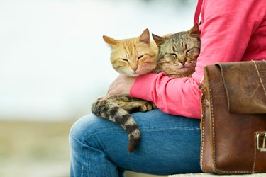 Two cats lying on lap of woman.