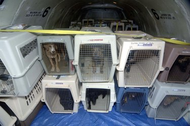 Here's How To Prepare An Emergency Disaster Kit For Your Pet