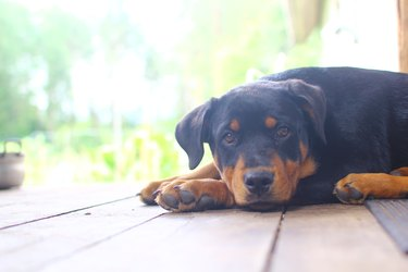 Sad dog 3