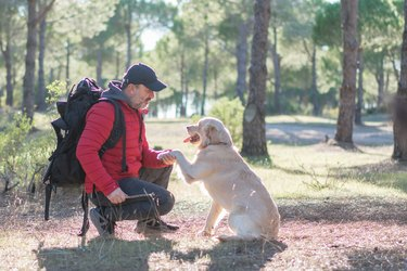 Man with a dog hiking and playing in forest