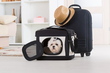 Dog sitting in a carrying case